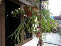 50 types of plants and flowers for sale