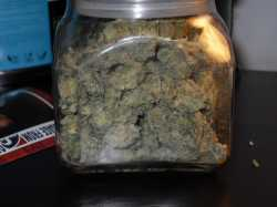 White widow, Og kush, purple kush, blue dream, gdp, girl scout cookie, sour diesel