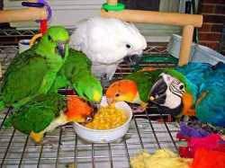 Talking parrots for good prices