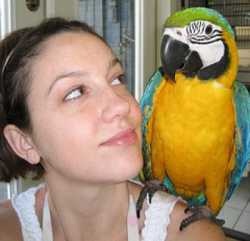 Order now and have your beautiful Blue and Gold Macaw baby