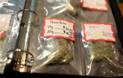 SOUR DIESEL, OG KUSH, PURPLE HAZE AND MORE STRAINS FOR SALE
