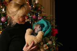 *Awasome Female and male baby capuchin for free Adoption