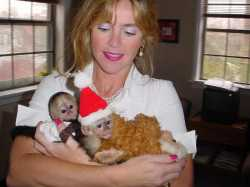 cute and adorable capuchin moneky for adoption