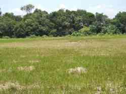 Residential Land in Sungai Siput