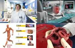 Human Tissues Information in Maryland