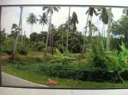 Land for Sale near Mersing Town