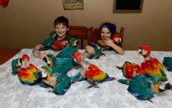 TALKING PAIR OF BLUE AND GOLD MACAW PARROTS FOR SALE
